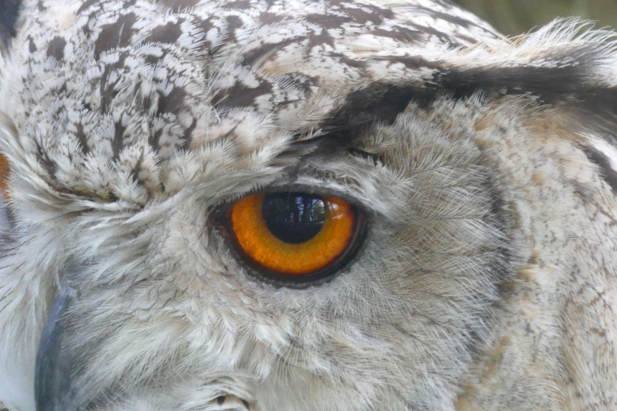 オレンジ色の瞳 動物 その他の陸の生物 Ganref