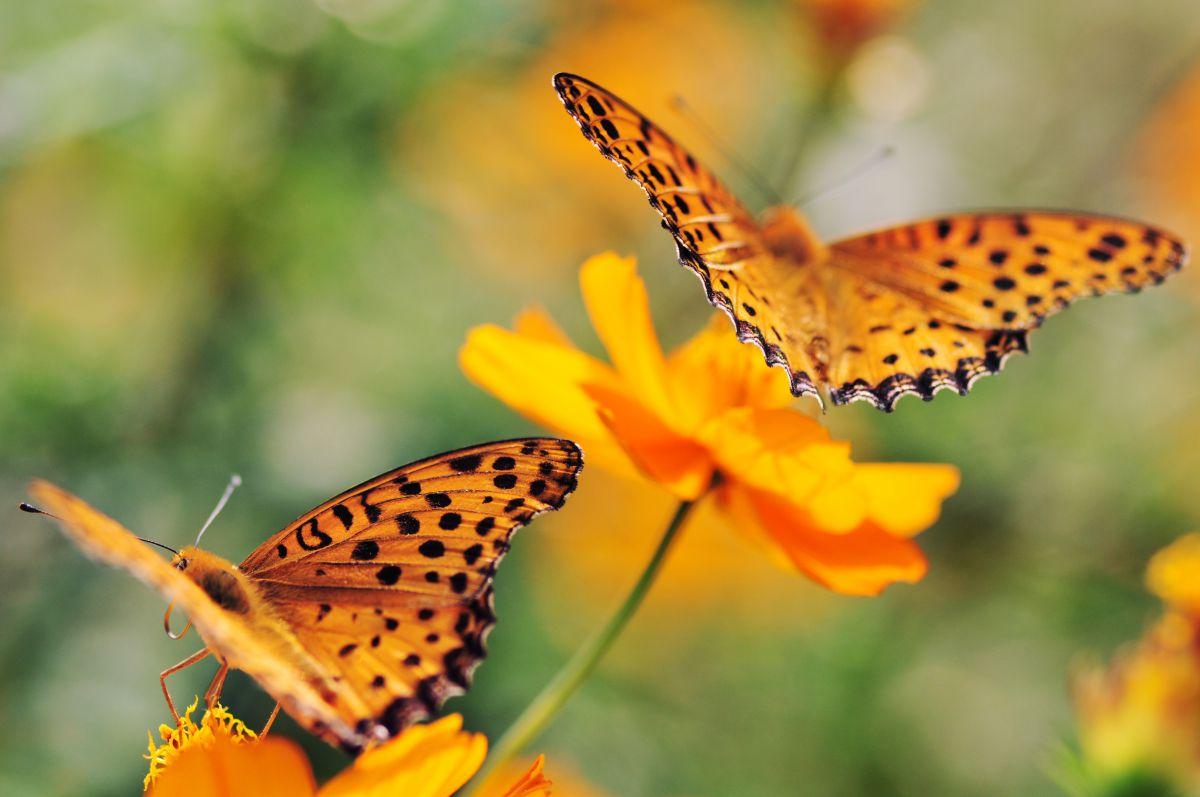 オレンジ色の日々 動物 虫昆虫 Ganref